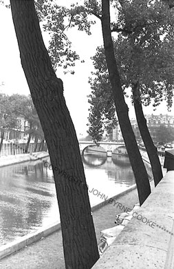 Trees by the Seine