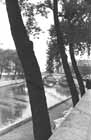 thumbnail of Trees by the Seine
