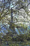 thumbnail of Eiffel Tower through tree, no. 2